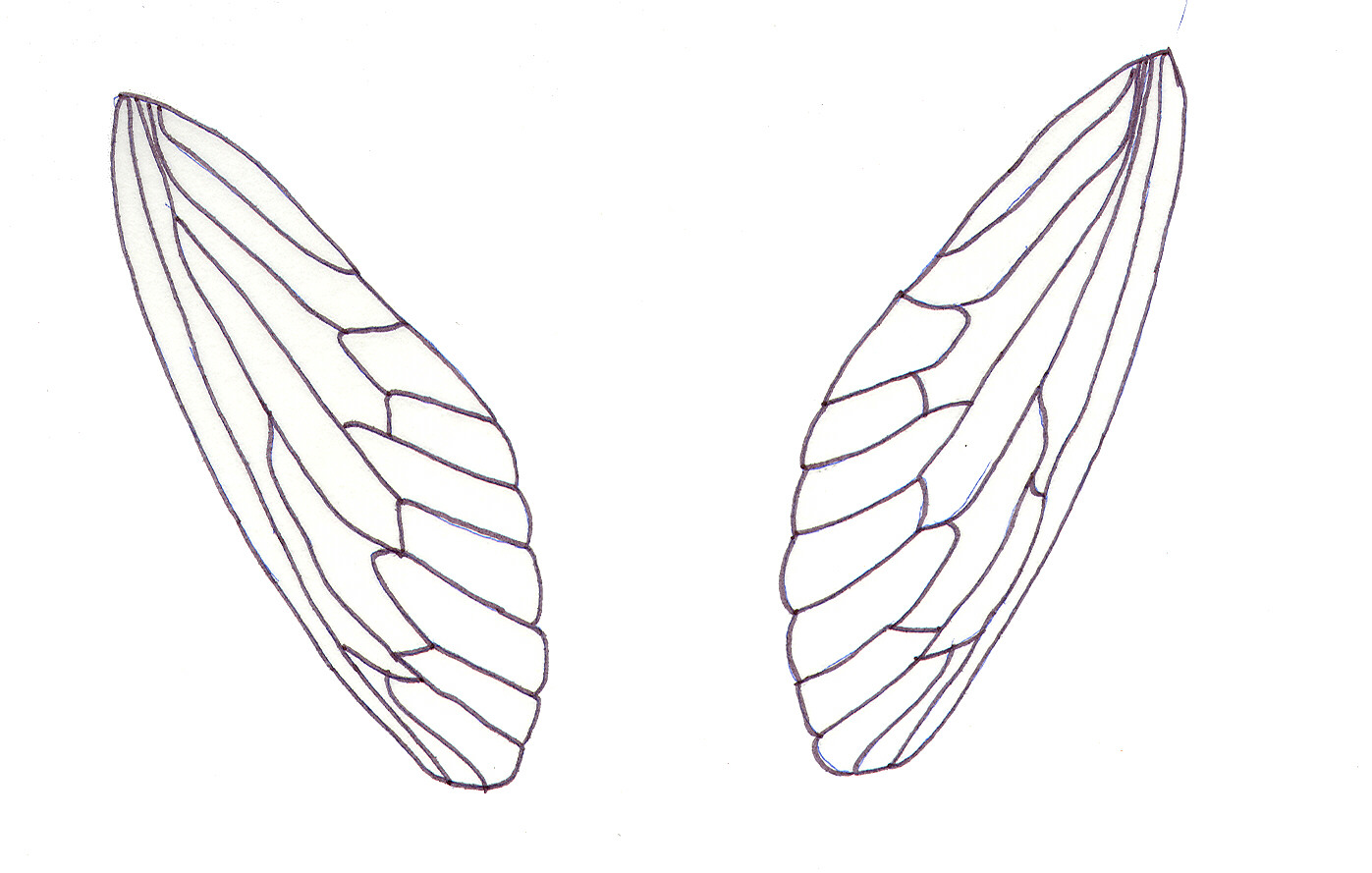 picture regarding Free Printable Fairy Wings identified as Fairy Cicada Wings - White Gothic Studios